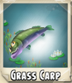 File:Grass Carp Photo.png