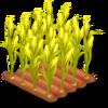 Corn Stage 4
