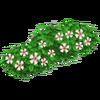 Raspberry Bush Stage 2