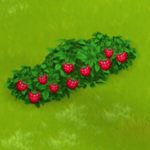 Raspberry Bush Harvest 3