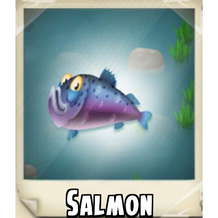 File:Salmon Photo.png