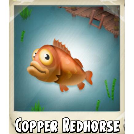 File:Copper Redhorse Photo.png