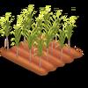 Sugarcane Stage 3
