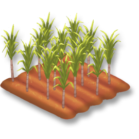 File:Sugarcane Stage 3.png