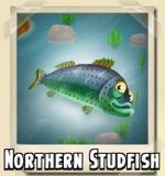 Northern Studfish Photo