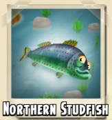 File:Northern Studfish Photo.png