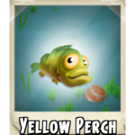 Yellow Perch Photo