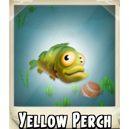 File:Yellow Perch Photo.png