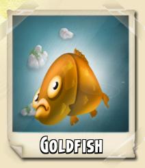 File:Goldfish Photo.jpg