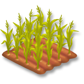 File:Corn Stage 3.png