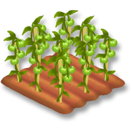 File:Tomato Stage 3.png