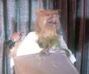 Jerboa as Werewolf (Howling III)