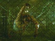 Barb wire trap