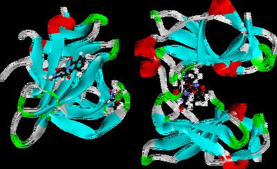(S)-thalidomide bound to murine cereblon