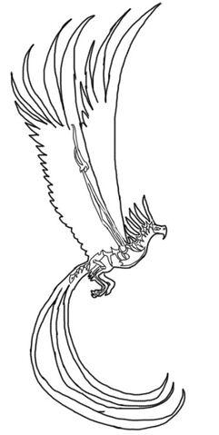 File:FyreAnatomy Skeletal.jpg