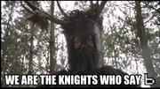 B knights