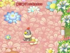 HKO a Cluckadoo0060