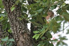 JMGard Pterocarpus santalinus