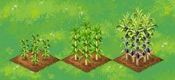Farm-Sugar 123