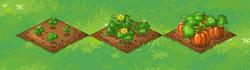 Farm-Pumpkin 123