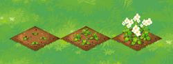 Farm-Horseradish 123