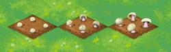 Farm-Mushrooms 123