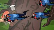 Barbets 4