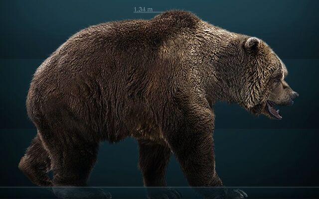 File:Cave Bear.jpg