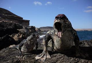File:Primeval Mer-creature.jpg