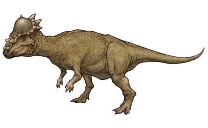File:Pachycephalosaurus.jpg