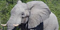 DW: Elephant