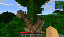 Ruins - Tree - Steps