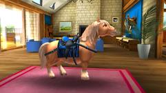 Shetland Pony 3