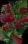 HO StarG Rasberries-icon