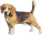 HO CandyS Dog-icon