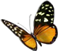File:HO BriggsRoseGarden Butterfly-icon.png