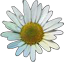 File:HO BriggsRoseGarden Daisy-icon.png