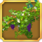Quest Task Get Ivy-icon