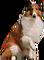 HO PBarn Collie-icon