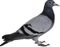 HO RFront Carrier Pigeon-icon