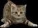 HO Beach Kitten-icon