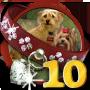 Quest Doggone Dog 10-icon