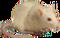 HO StillLife Mouse-icon