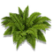 Material Ferns-icon