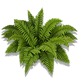 File:Material Ferns-icon.png