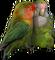HO BriggsRoseGarden Love Birds-icon