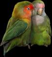 File:HO BriggsRoseGarden Love Birds-icon.png