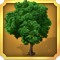 Quest Task Beech Tree-icon