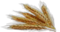 HO ChiHome Wheat-icon