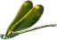 File:HO RomanyCamp Dragonfly-icon.png